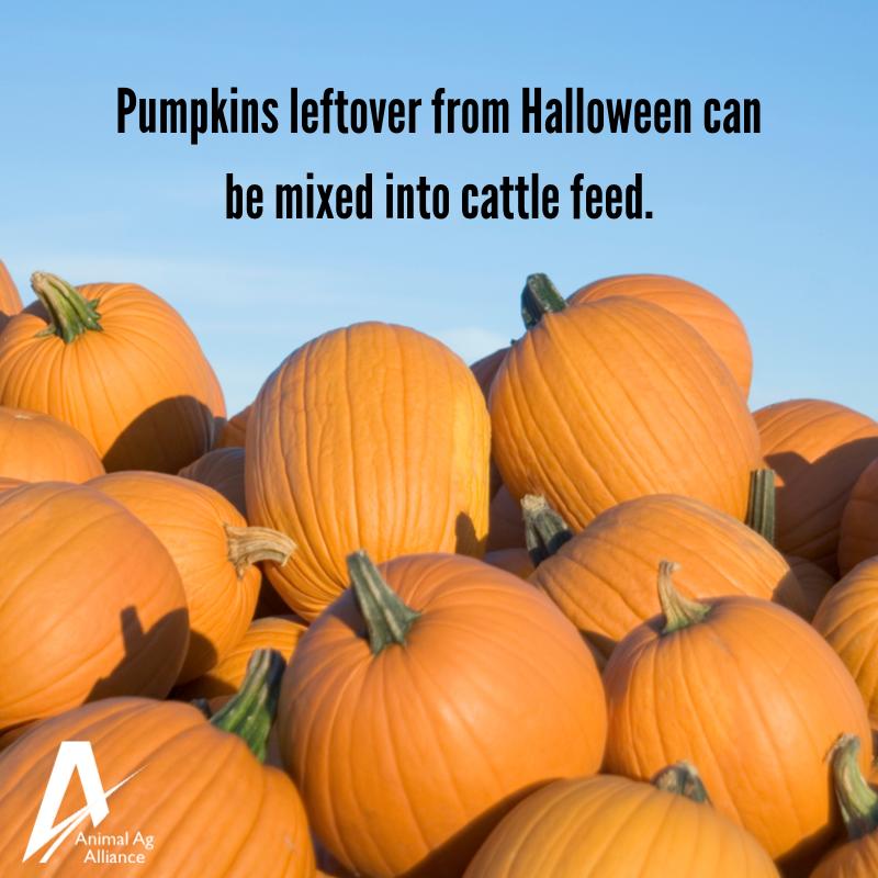 Pumpkin season is here, but what happens to pumpkins