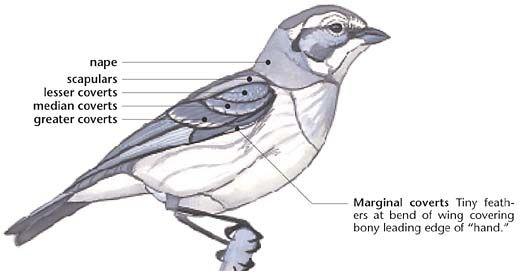 Swartzentrover.com | External Anatomy of a Bird | Птички | Pinterest ...