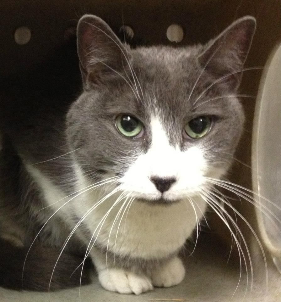 URGENT Munster (A19018179) 5 10 years old. He