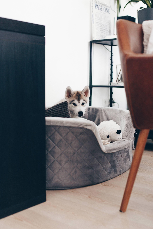 Sauberer Haushalt Mit Hund Hygiene Und Hunde In Der Wohnung Tipps Und Tricks Fur Den Hunde Alltag Leben Mit Hund Hund Hunde Hunde Futter Alles Fur Den Hund