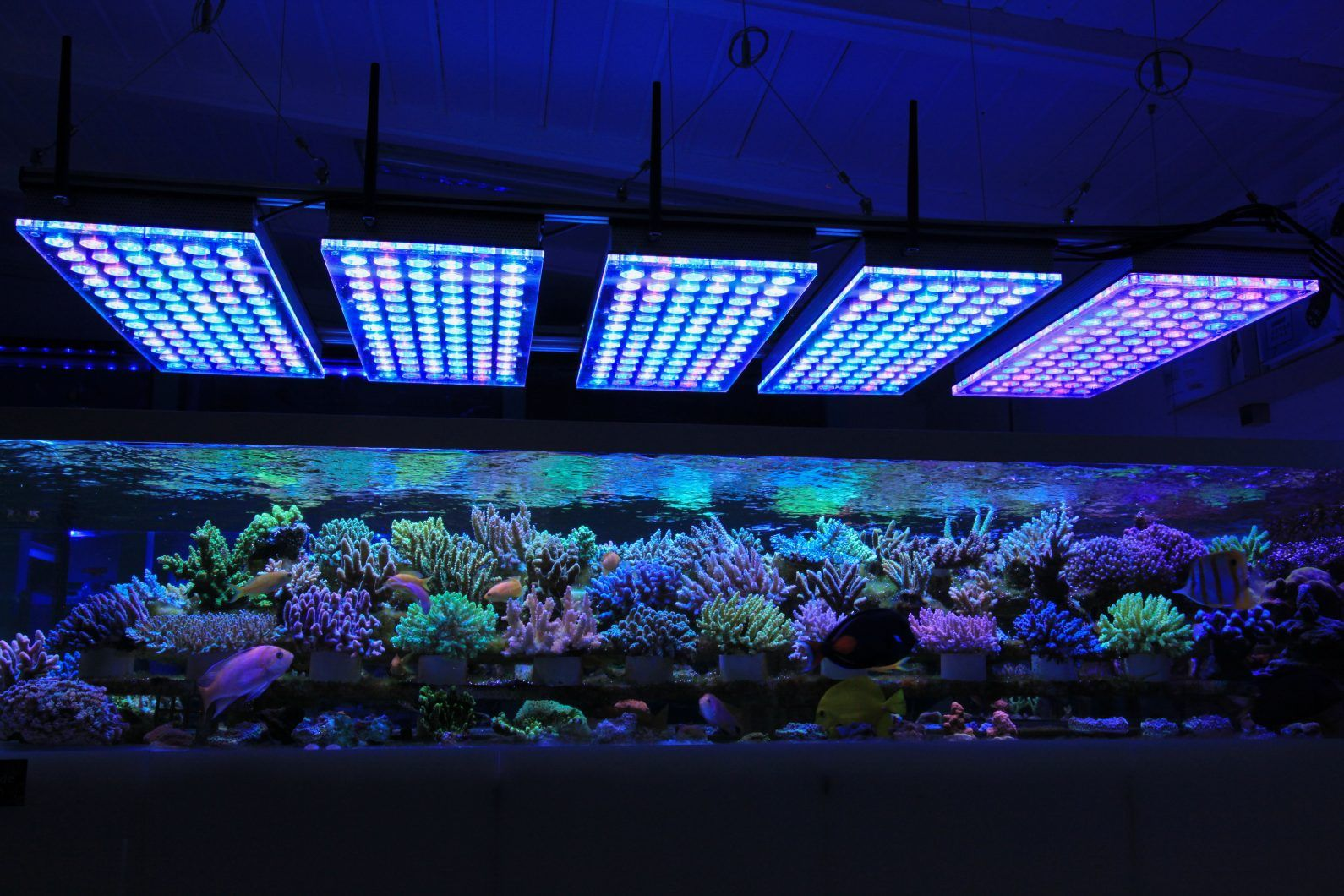 malaysia led lighting uk corals product aquarium lps reef sps for detail soft nano best