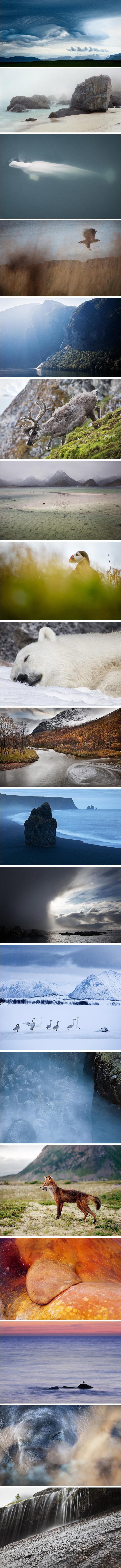 Nature Photography: Fredik Odman