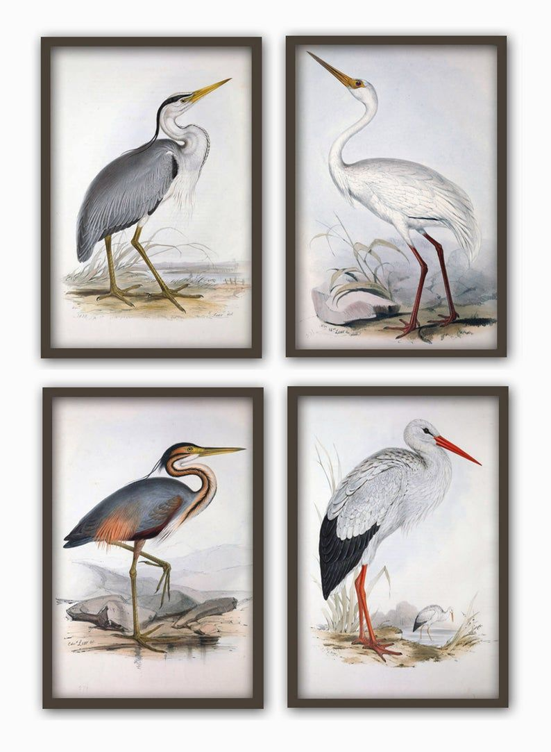 Birds wall art print set of 4 antique bird illustration