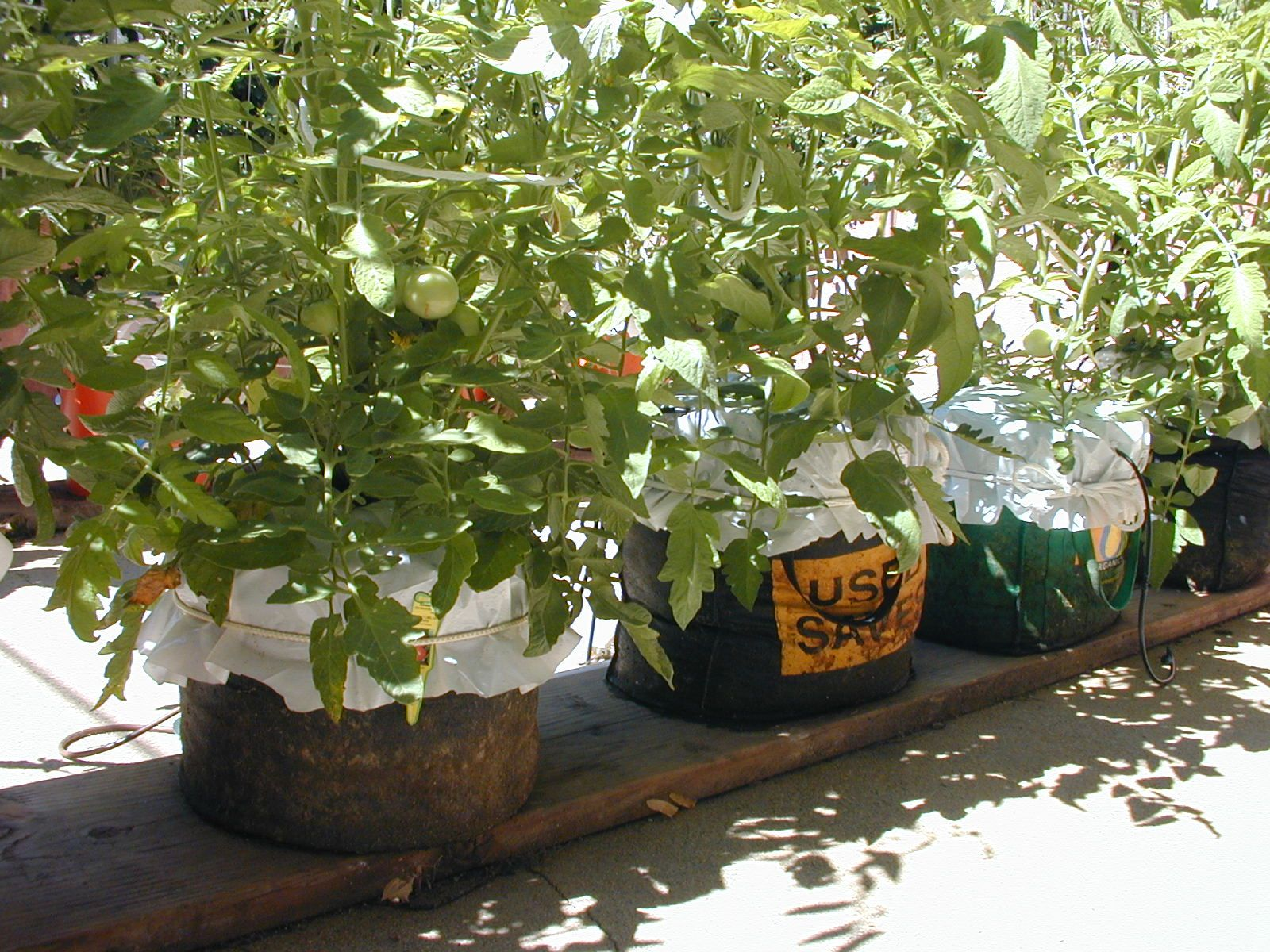 Ordinaire Vegetable Garden Using Bagged Potting Soil   Bing Images