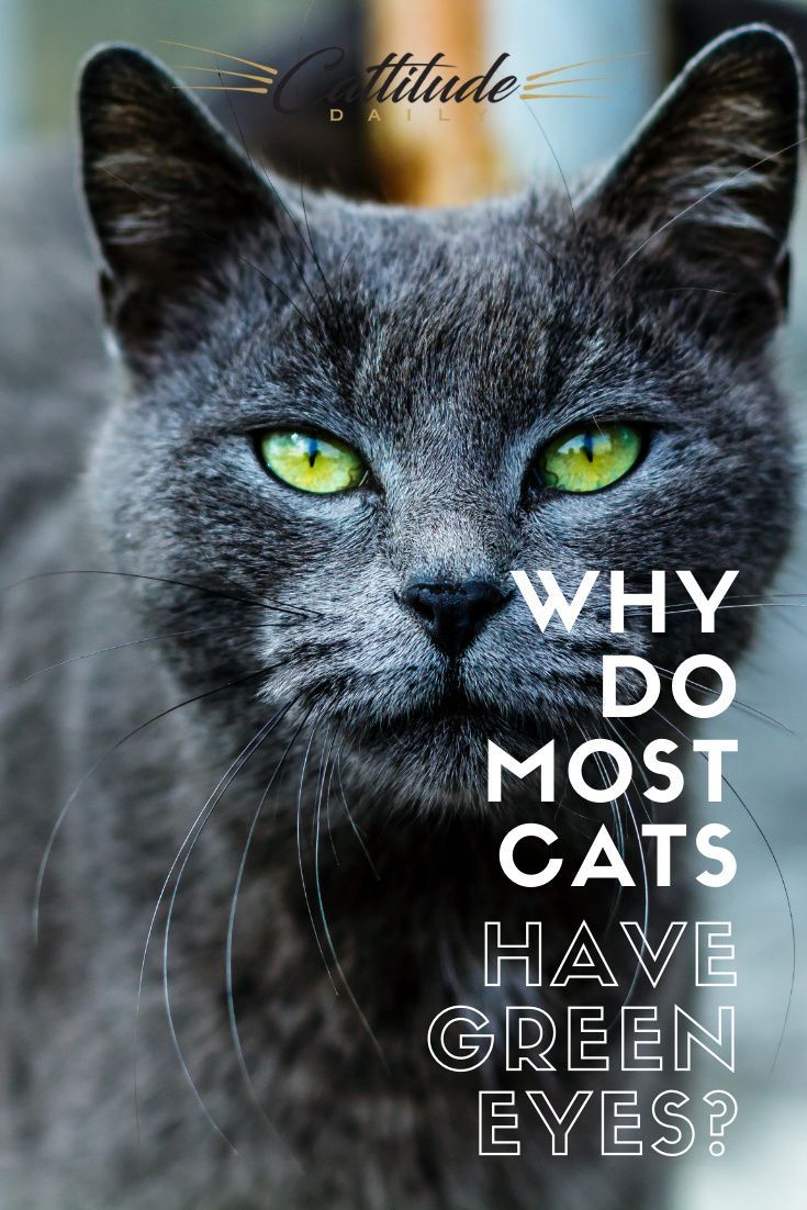 Why Do Most Cats Have Green Eyes? in 2020 | Cats Green ...