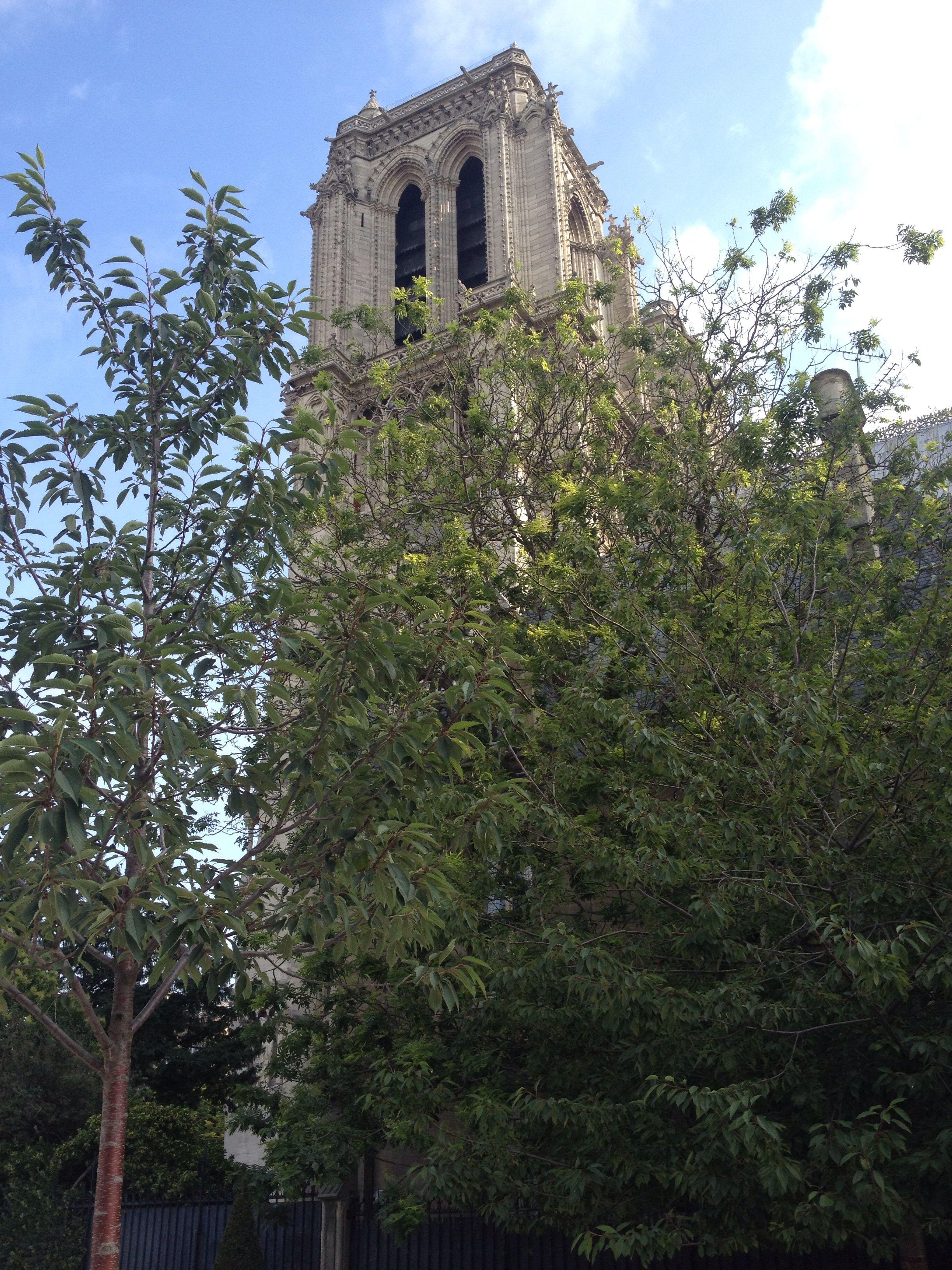 Cathédrale Notre Dame de Paris  iPhone 4S