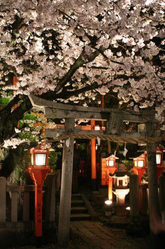 Cherry Blossoms Kyoto 2007 1 Cherry Blossom Japan Bucket List Sakura Cherry Blossom