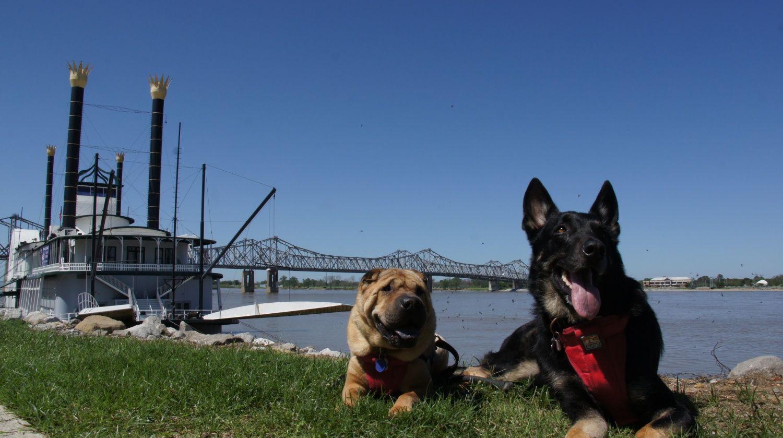 pet friendly road trip idea: natchez trace parkway! #nashville #dog