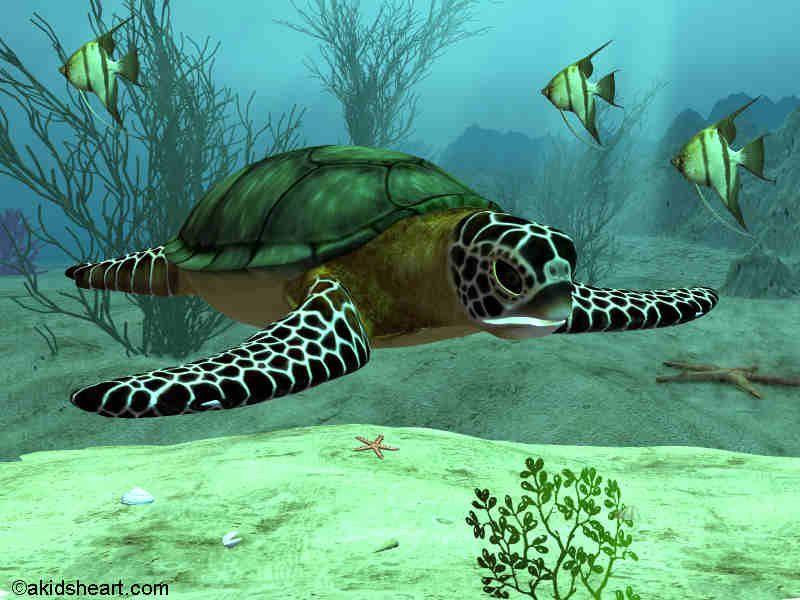 Stunning Sea Turtle.