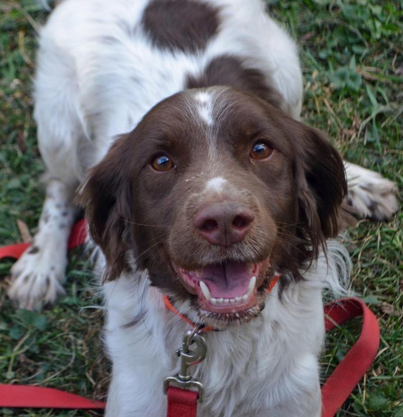 Adopt Cody On Animal Control Animals Humane Society