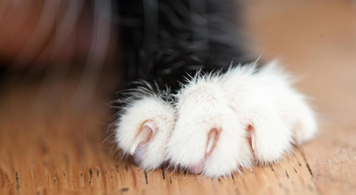 Soft Paws Can Help Protect Doors And Walls From Cat Scratches Cat Cathealth Catwellness Furniture Catscratching Scratc Soft Paws Mama Cat Cat Scratching