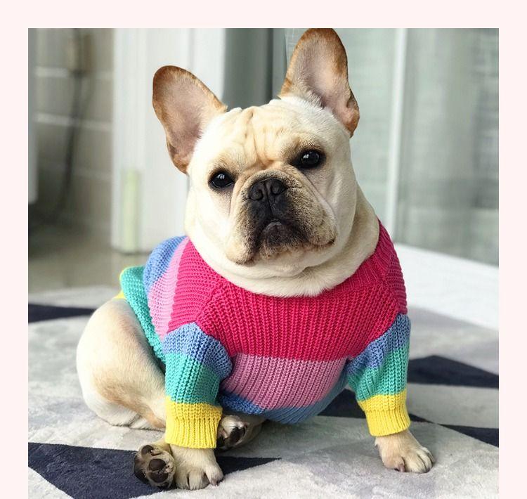 Rainbow Dog French Bulldog