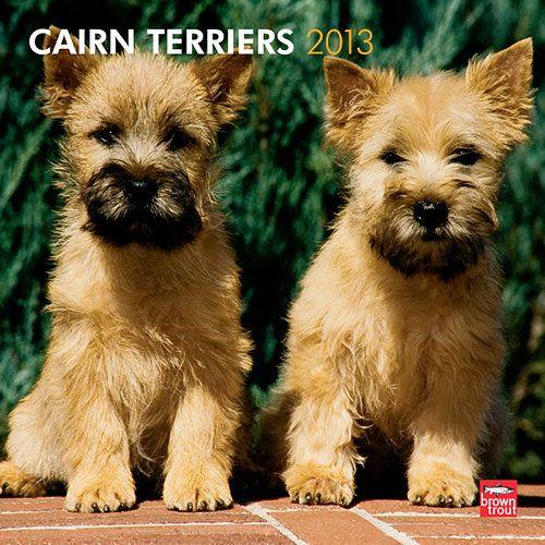 Cairn Terriers 2013 Wall Calendar Cairn Terrier Terrier Cool Pets