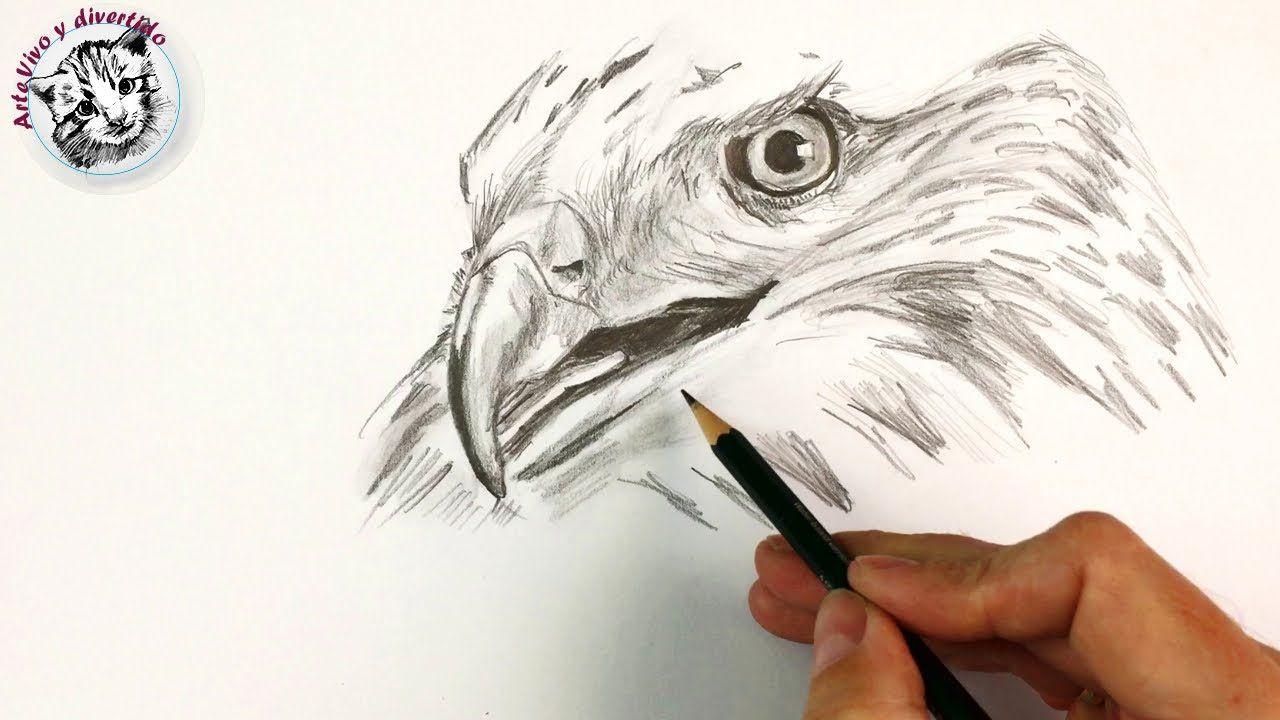 Como Dibujar Un Halcon Con Lapiz Paso A Paso Como Dibujar A Lapiz Como Dibujar Como Dibujar Animales