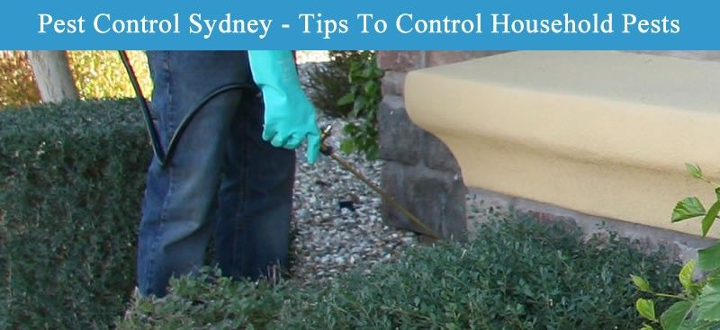 Pest control sydney tips to control household pests
