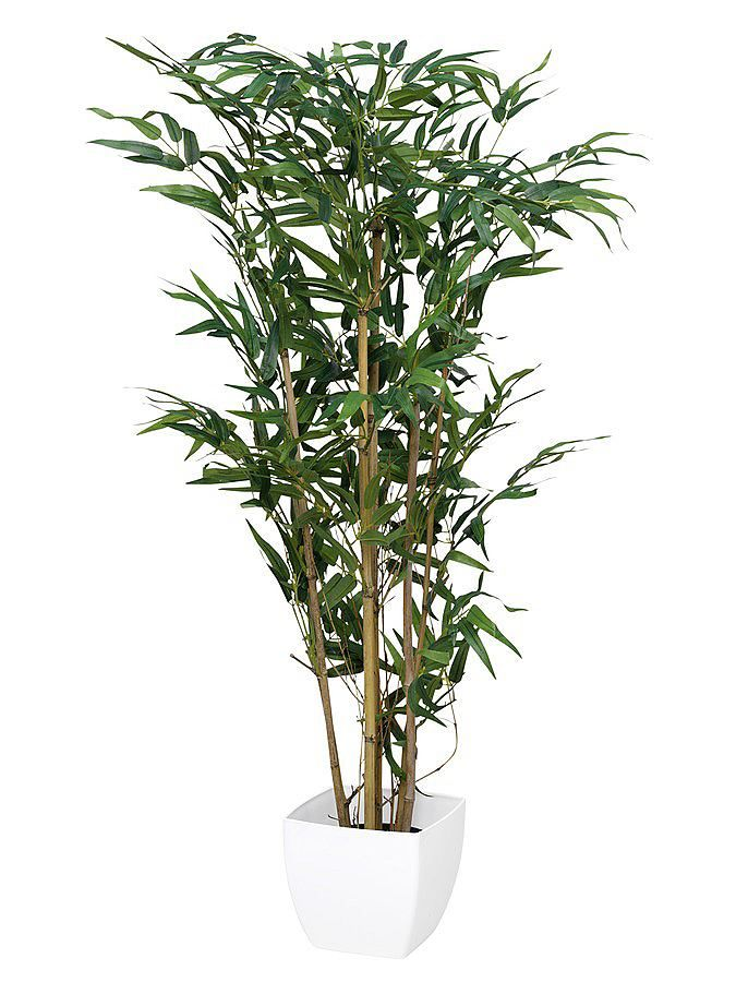 Aus Natur-Bambusstämme und Textilbättern. Fest im Kunststofftopf arrangiert. Mit weißem Übertopf. H/B ca. 120/60 cm....