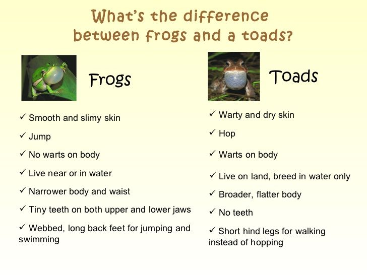 Toad Vs Frog Google Search Zoology Pinterest Toad Frog And