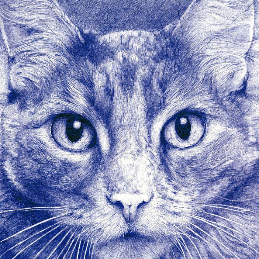 Dibujo a bolígrafo de un gato. Lo he escogido por el gran realismo ...