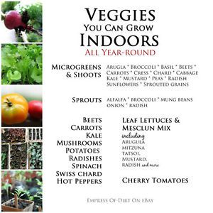 Some veggies are easy to grow indoors. Try a few varieties and see what works in your home.
