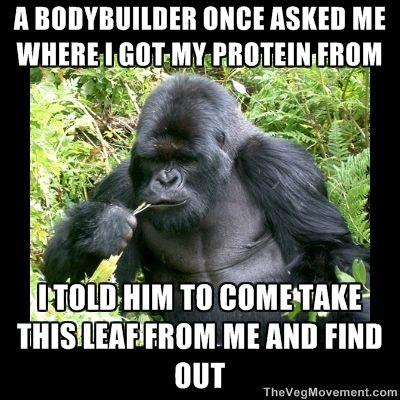 Gorilla Leaf Protein -- vegan rebuttal! :)