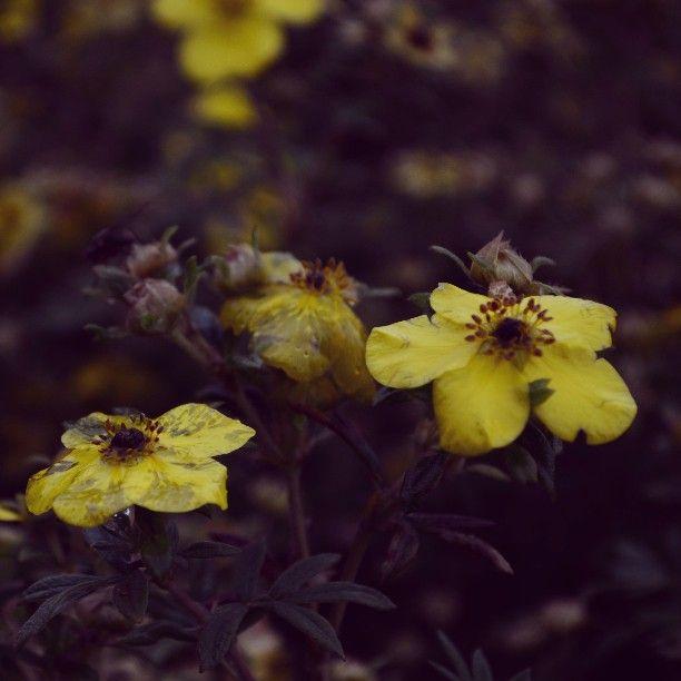 Herbstliche Blumen in gelb #Herbst