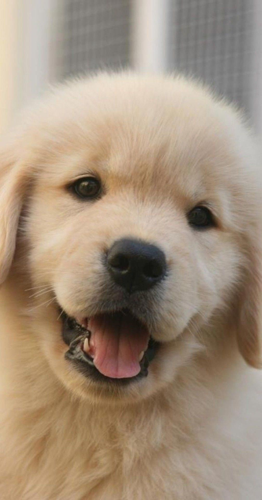 Acquire Fantastic Ideas On Goldens They Are Actually Readily