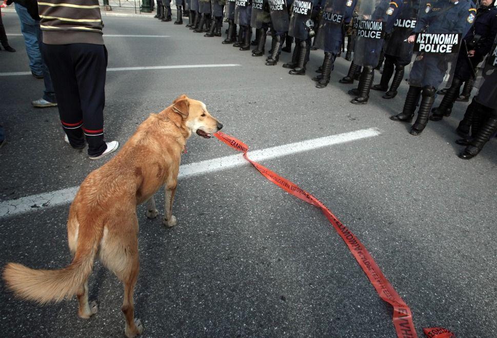 R.I.P Λουκάνικε... το σκυλί επαναστάτης σε διαδηλώσεις στην Ελλάδα..<3