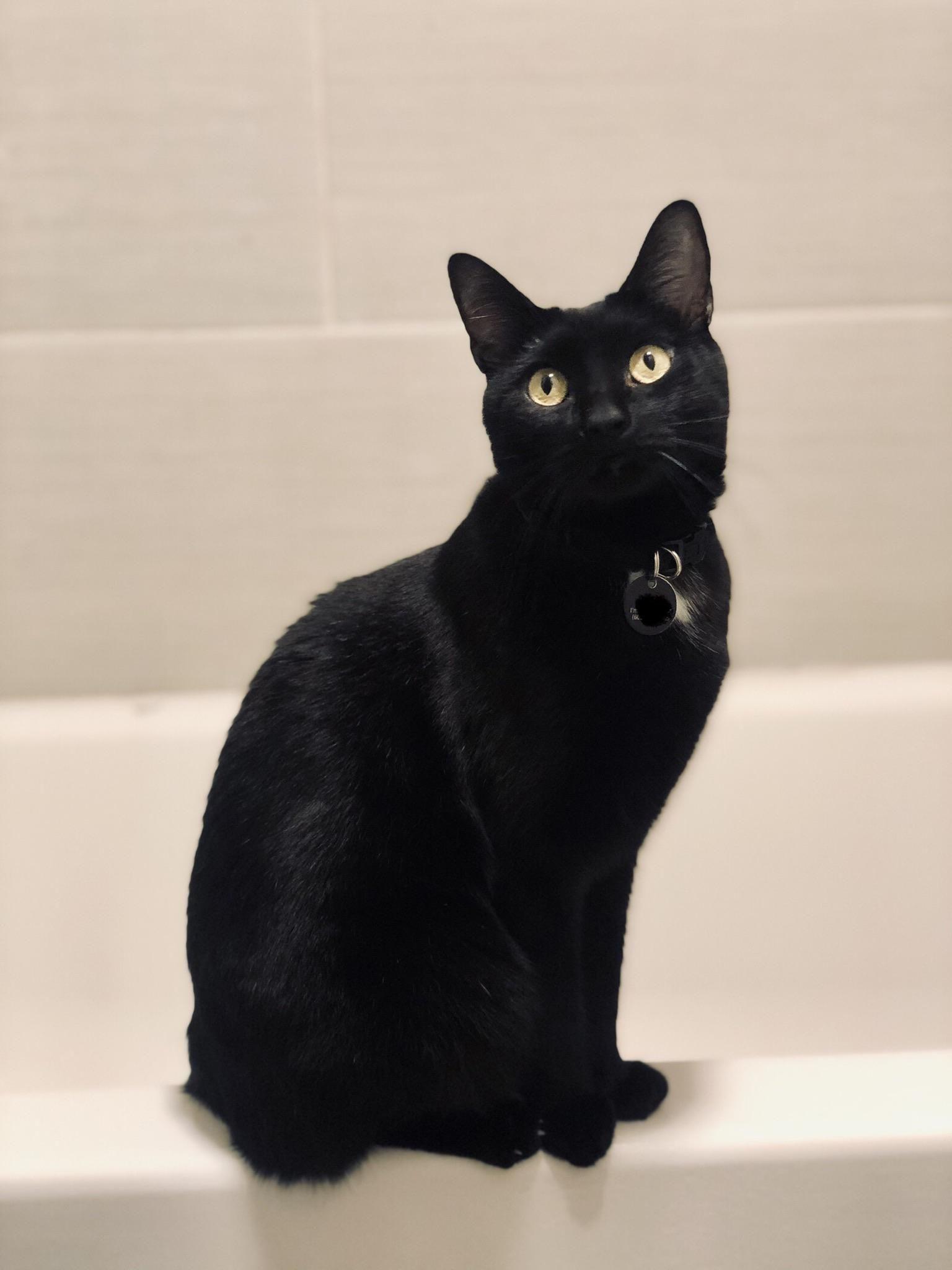 My sweetest spook Cats and kittens, Black cat, Black kitten