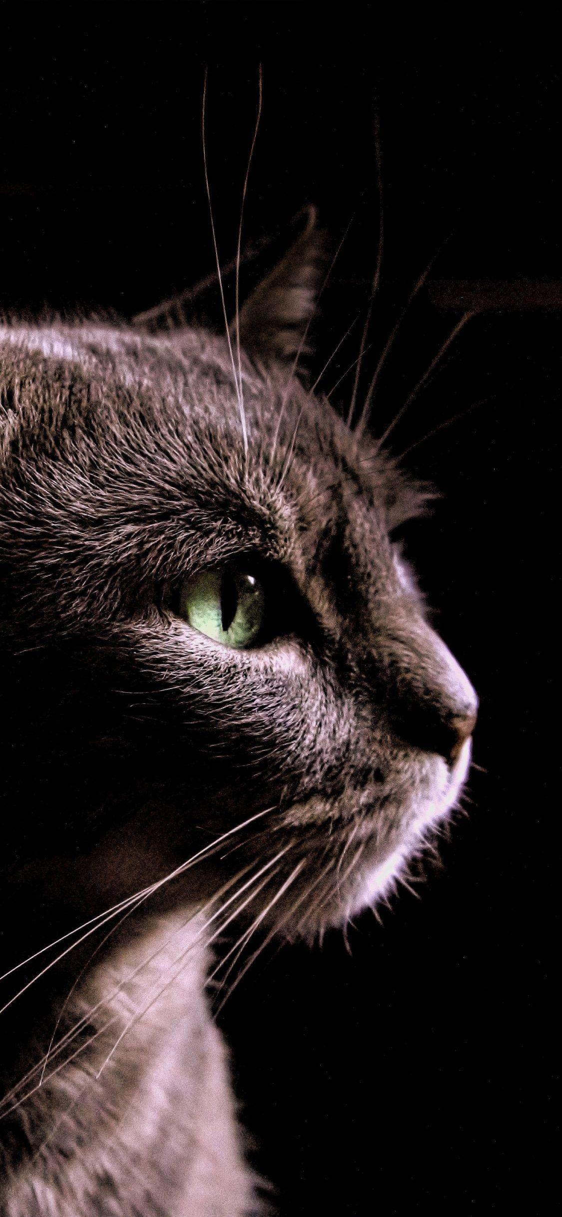 Cat Black Portrait 1125x2436 Wallpaper Cats Animal Wallpaper