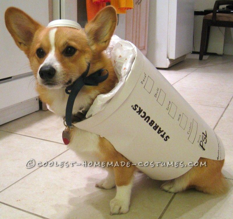 Starbucks Dog Costume Easy And Inexpensive Dog Halloween