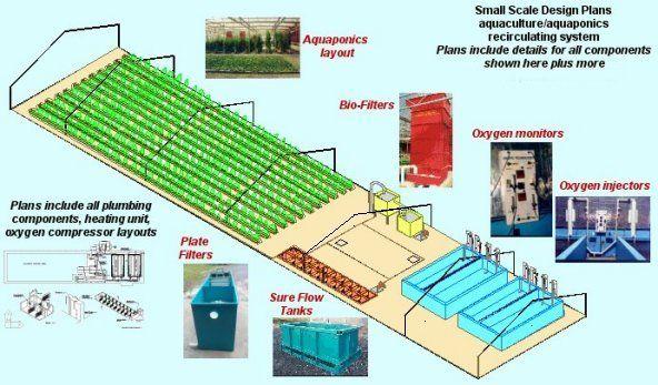 Aquaponics | Aquaponics System Plans | Garden | Aquaponics ...