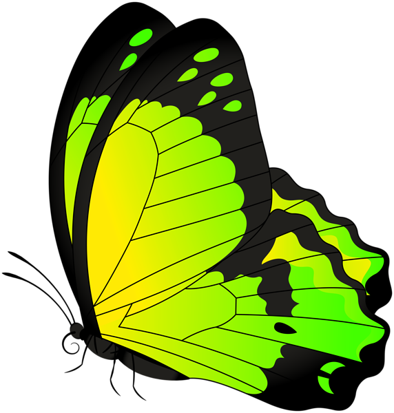 Butterfly Yellow Green Transparent Clip Art Image Obrázky