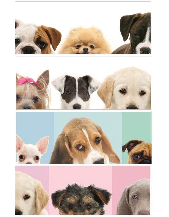 Dog Breed Puppies Mural Style Prepasted Wallpaper Wall Border