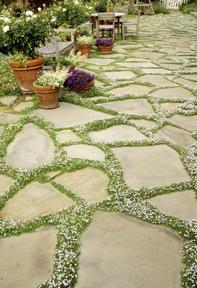 Thyme planted between pavers for low-maintenance beauty. Beautiful patio.