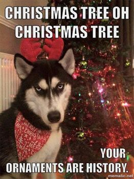 Loving these Xmas dog funnies :-) http://www.dfordog.co.uk/blog ...