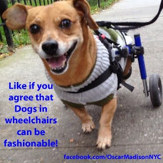 Handicapped Pets: Wheelchair Dog Excluded from Today Show Catwalk