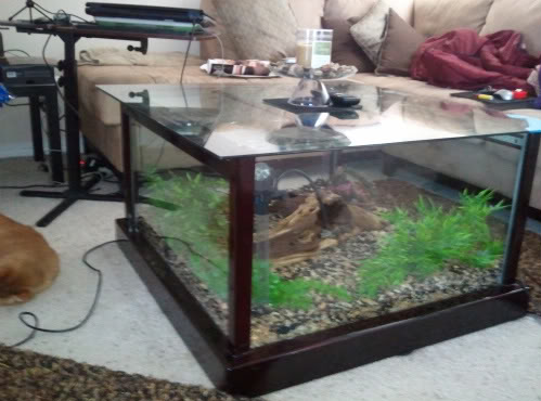 lol, i'm not sure i trust myself with a fish tank on the floor