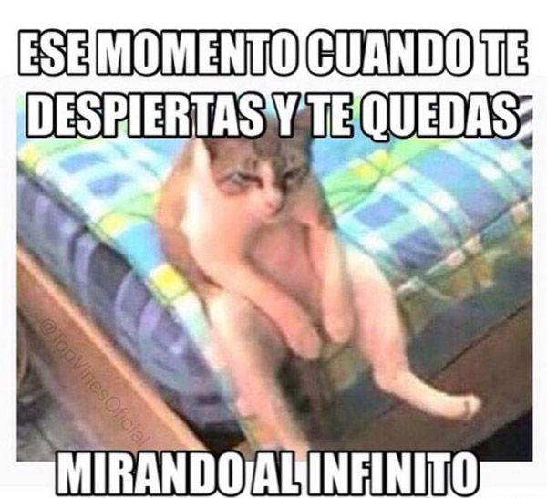 Love Each Other When Two Souls: Best 25+ Buenos Dias Meme Ideas On Pinterest