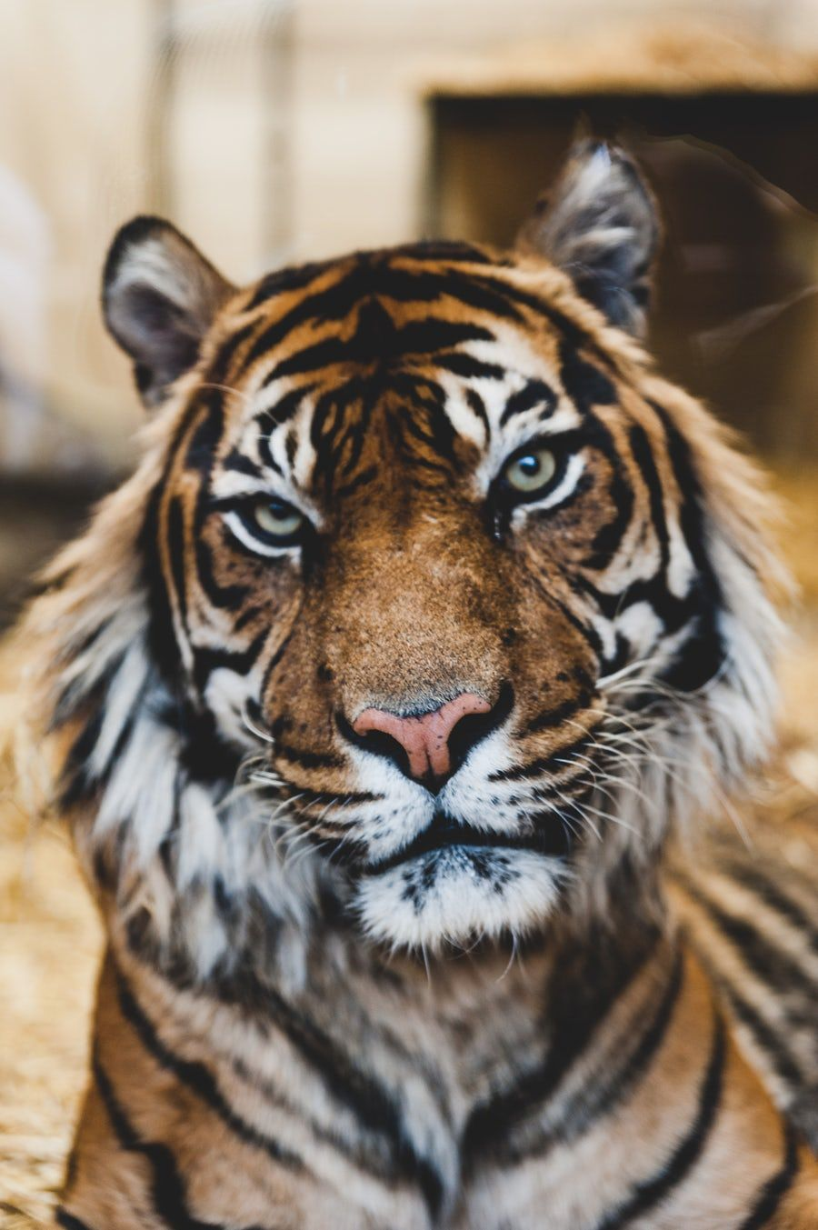 Animal Pictures [HD] Download Free Images & Stock Photos