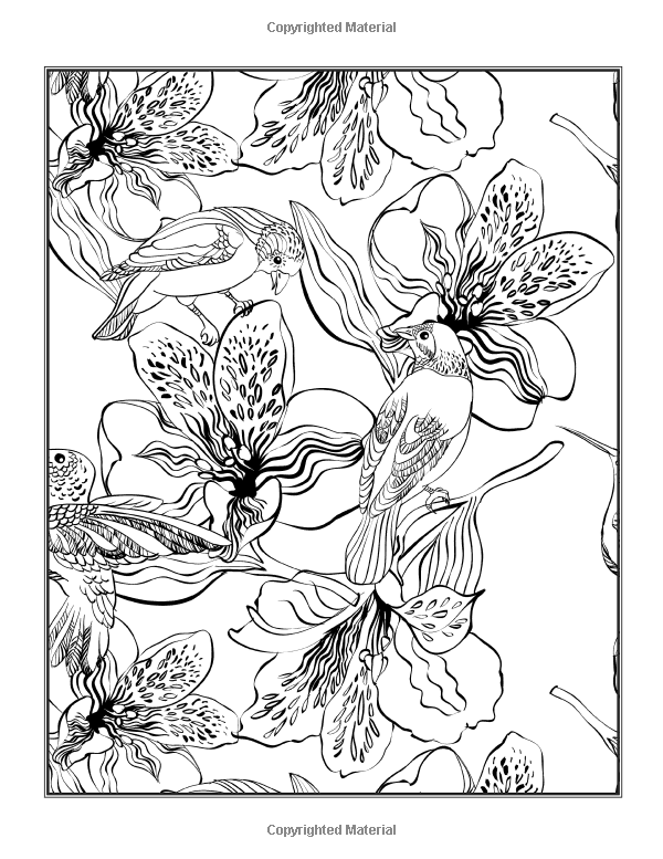 Flowers Coloring Book Beautiful Pictures From The Garden Of Nature Chartwell Coloring Books Patience Coster 97807858 Coloring Books Color Colorful Flowers