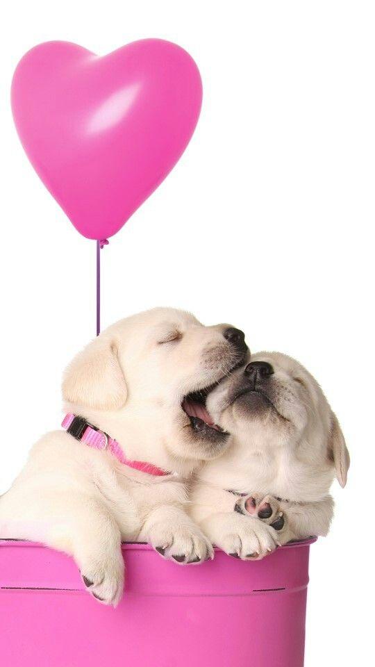 Puppy Love Cute Dog Wallpaper Dog Wallpaper Puppy Wallpaper Iphone