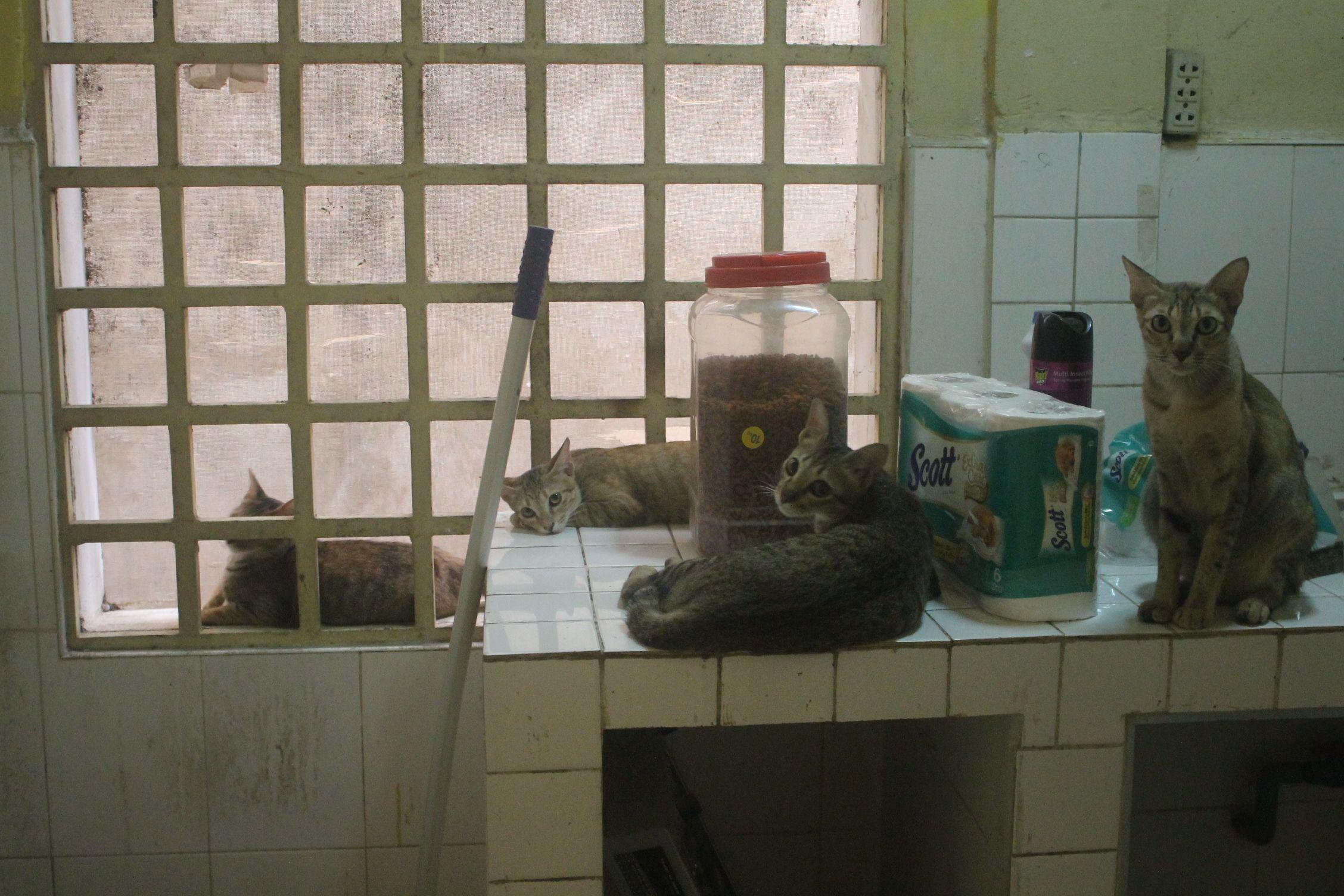 Gatos en nuestra casa en Phnom Penh