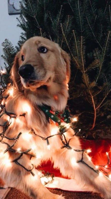 Christmas boye feelin heckin festive