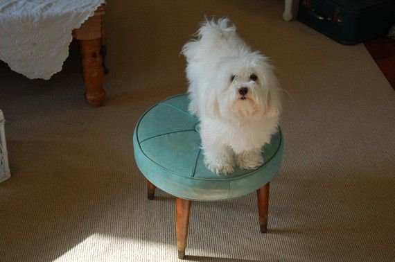 This pooch is in love with this stool as much as I am!
