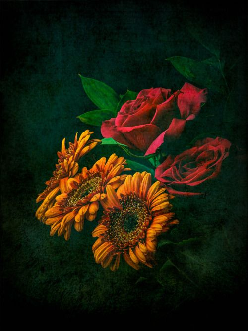 Sig Nordal, Jr. : Floral tones. by Free the Image http://flic.kr/p/A98Xhh