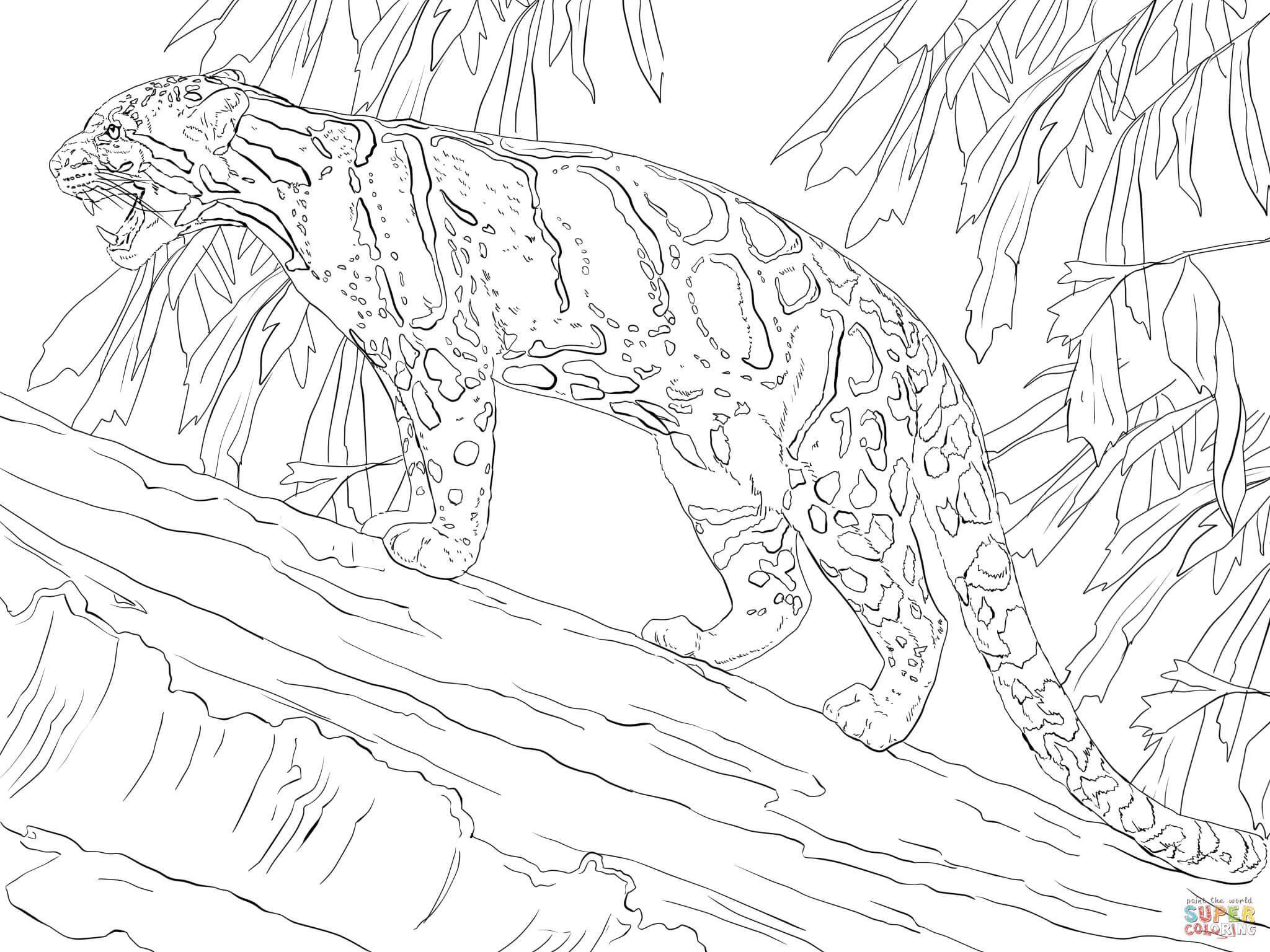 Clouded Leopard Standing On Tree Super Coloring Leopard
