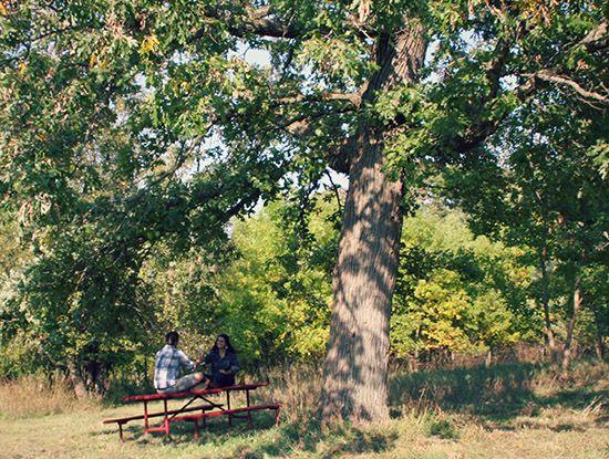 drinking wine underneath the oaks