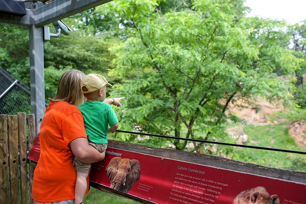 Just One Mile From Downtown Grand Rapids This Classic Urban Zoo Features 2 000 Animals A Petting Zoo Aquarium Zip Line Ropes C Grand Rapids Zoo Ziplining