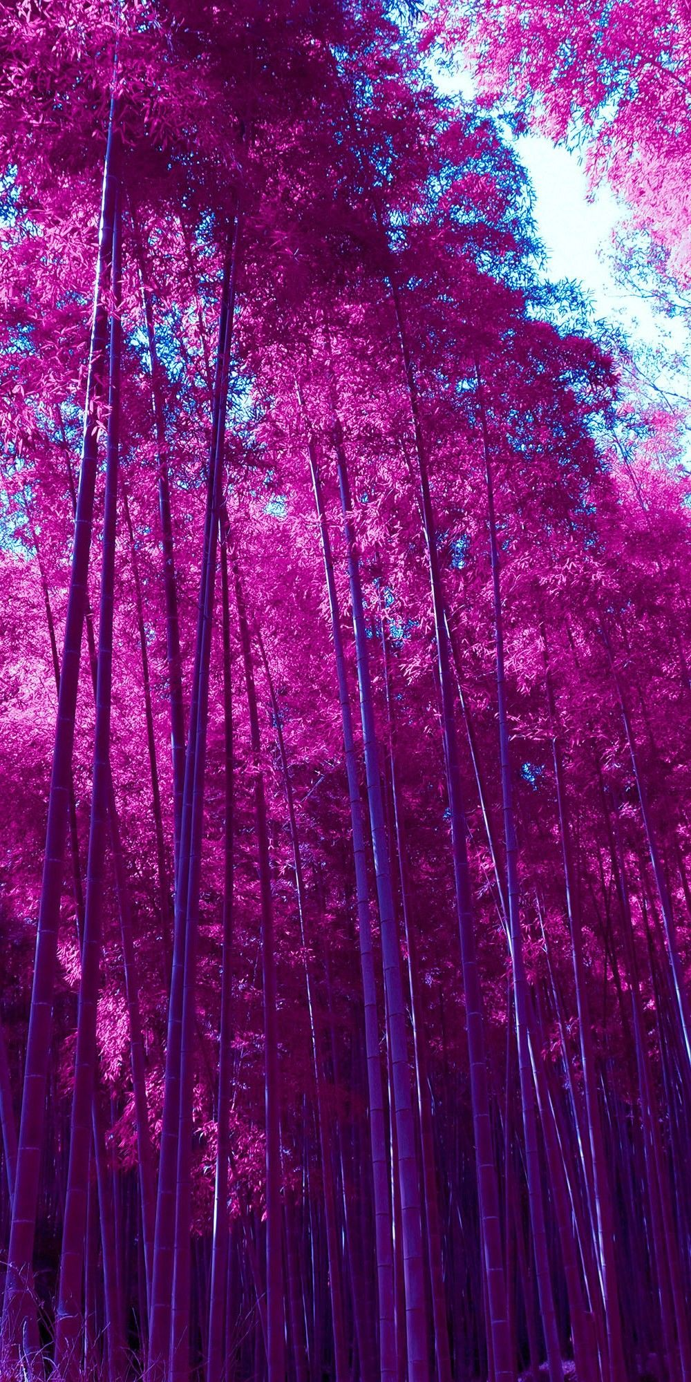 Pin By Iyan Sofyan On Nature Photography Free Halloween Wallpaper Romantic Wallpaper Purple Leaves