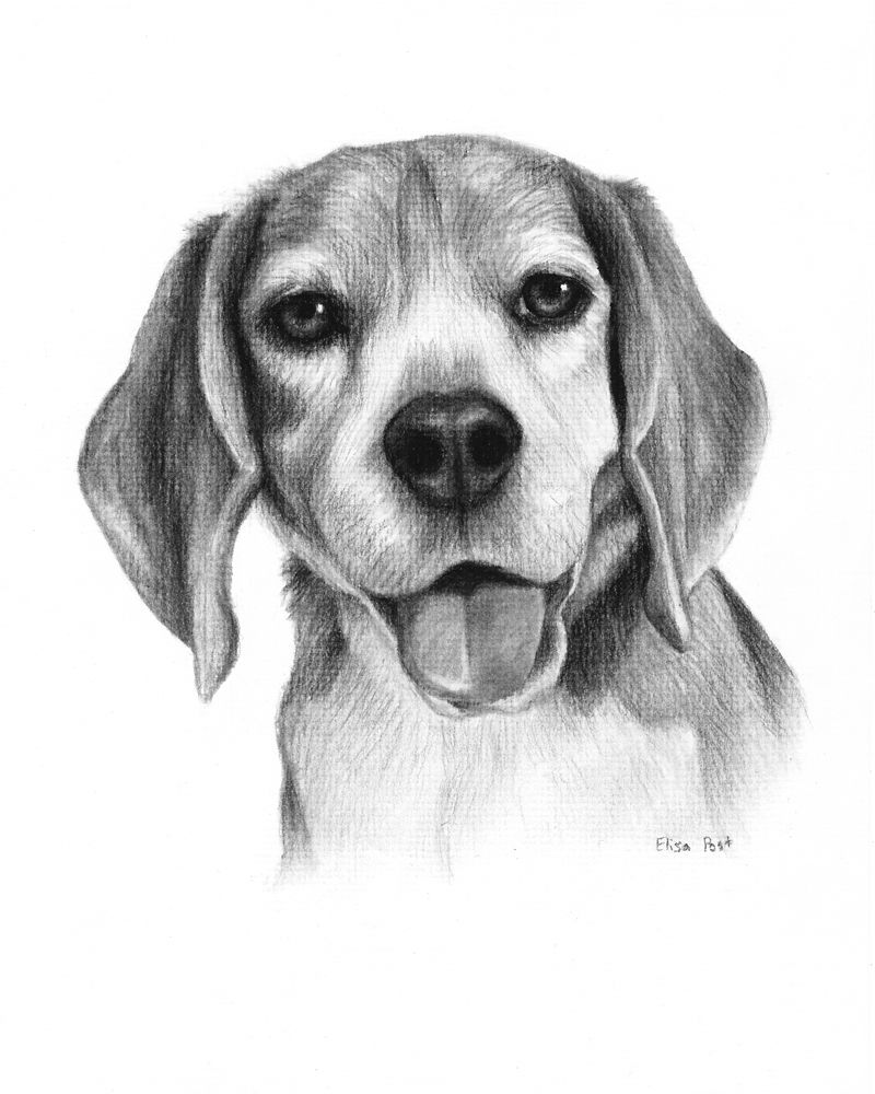 Dog Portrait Drawing Dog Drawing Custom Custom Pet Drawing